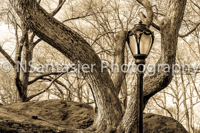 An old style of a lamp and tree.